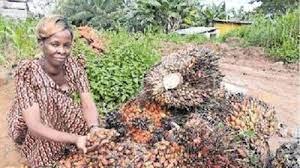 Nansamba Jane is oil palm grower in Betta village, Uganda.